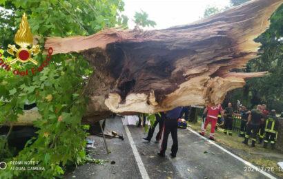 Maltempo / A Novi cade un albero sulla provinciale 413, autisti feriti