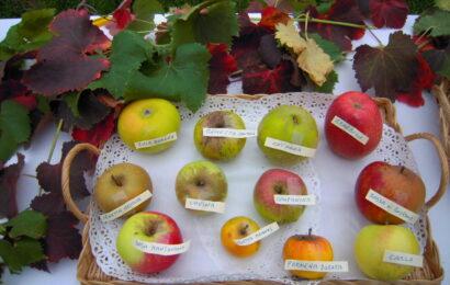 La frutta (quasi ) dimenticata al Parco della Terramara